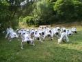 taekwondo_en_riera_de_ciuret_2009_155_20110811_1774259273-jpg