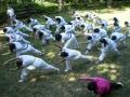 taekwondo_en_riera_de_ciuret_2009_187_20110811_1871843151-jpg